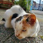我が家の猫の膀胱炎